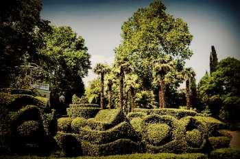 Растения в Гурзуфском парке