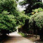 Гурзуфский парк — особенности и отдых