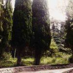 Парк Чаир в Гаспре
