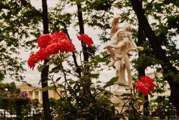 В парке Чаир распускаются розы