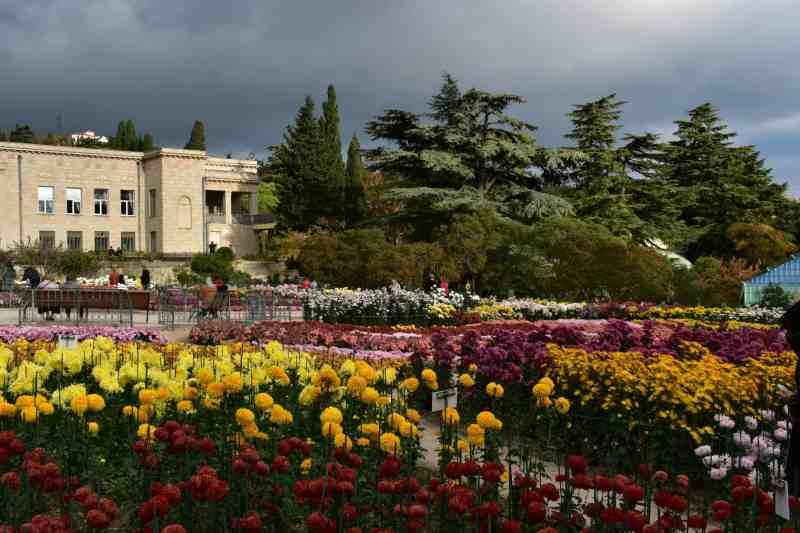 Никитский ботанический сад - выставка хризантем