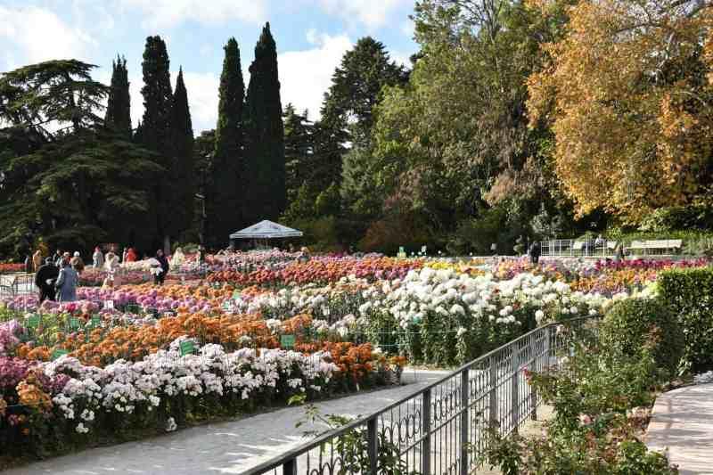Выставка хризантем в ботаническом саду