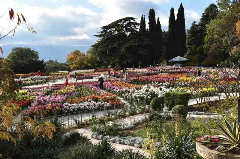 Никитский ботанический сад выставка хризантем