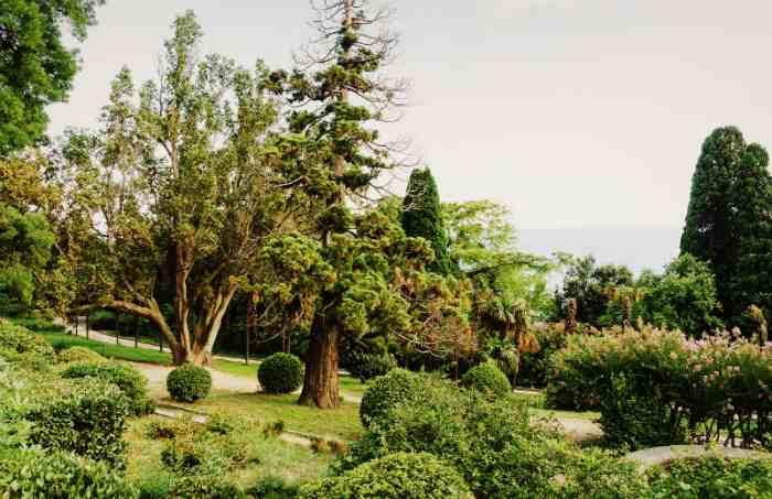 Аллеи парка