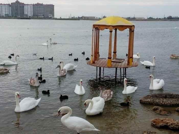 Озеро Сасык-Сиваш с лебедями