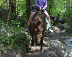 На лошадях через горные речки