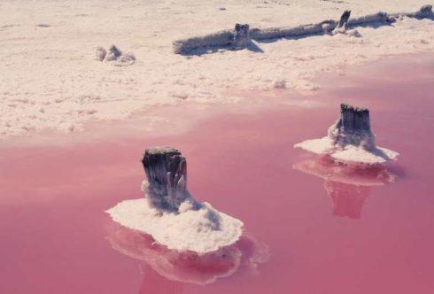 Розовае озеро Сасык - Сиваш в Крыму