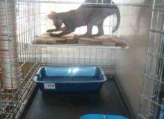 Гостиница для животных Адель в Ялте