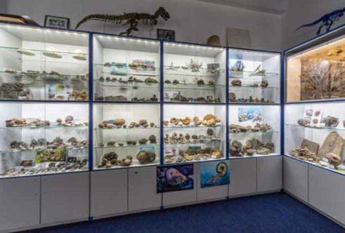 Палеонтологический музей Валентина Вербицкого в Ялте